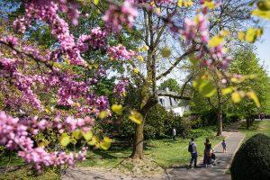 Nogent-sur-Marne ville fleurie 2019